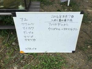 川遊び17