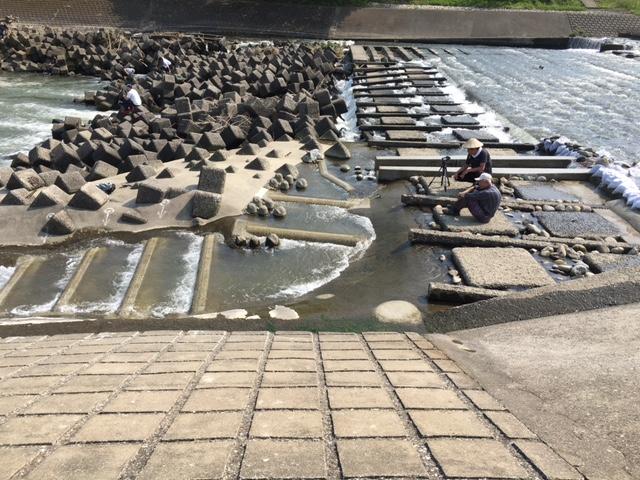 菅間堰魚道3